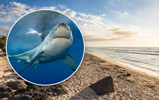 The shark was found to have a hand with a ring in its stomach