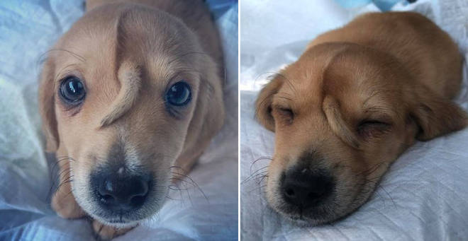 The adorable puppy was found by a rescue organisation