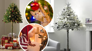 Argos are selling half Christmas trees, perfect for avoiding nasty falls and accidents