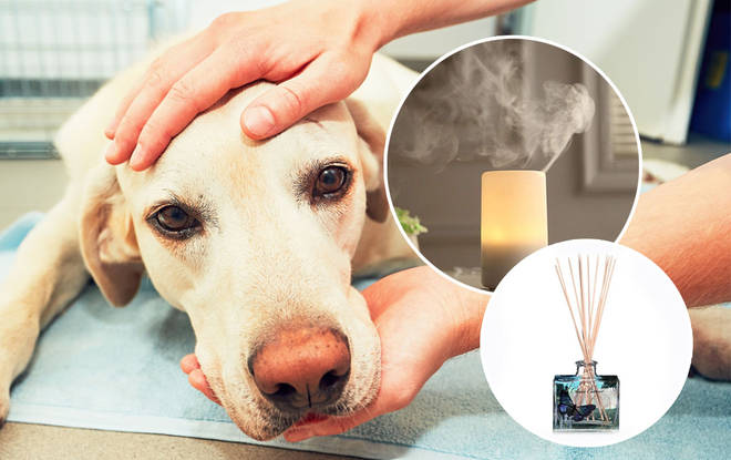 The poor pup was left seriously ill by the diffusers